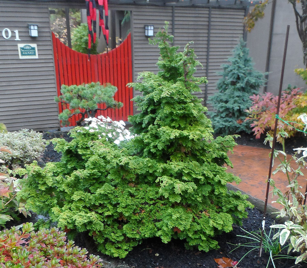 Evergreen Plants for Northwest Gardens | The Garden Hotline