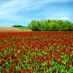Clover_Field_(Washington_County,_Oregon_scenic_images)_(washDA0013)