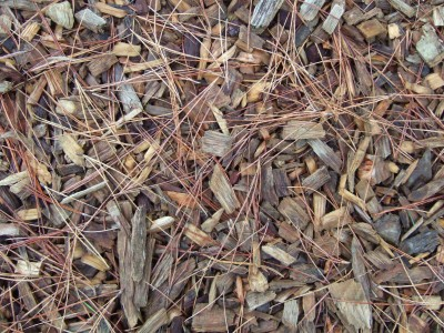 Soil_improvement_and_protection_-_wood_chip_mulch_at_Wisley