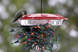 http://www.seattleaudubon.org/sas/learn/seasonalfacts/hummingbirds.aspx
